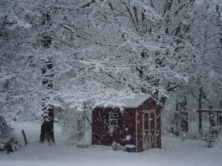 "the ""red"" shed"